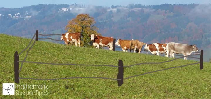 Kühe einzäunen